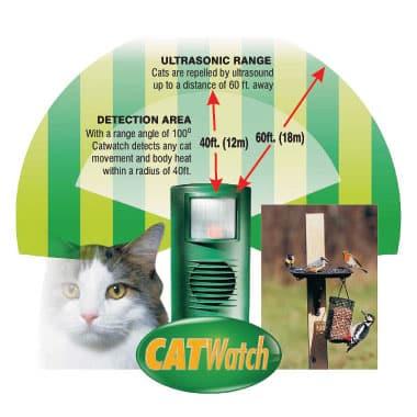 catwatch1